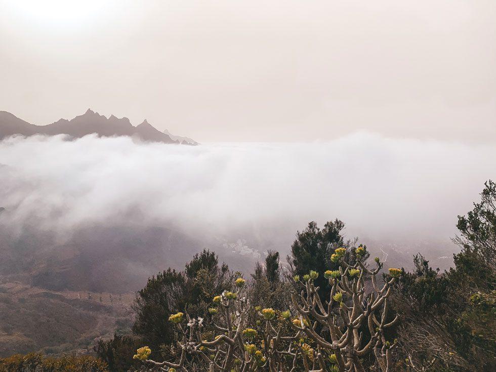 La panza de burro en Tenerife